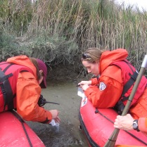 Sampling biofilms from the salt ponds of the South San Francisco Bay